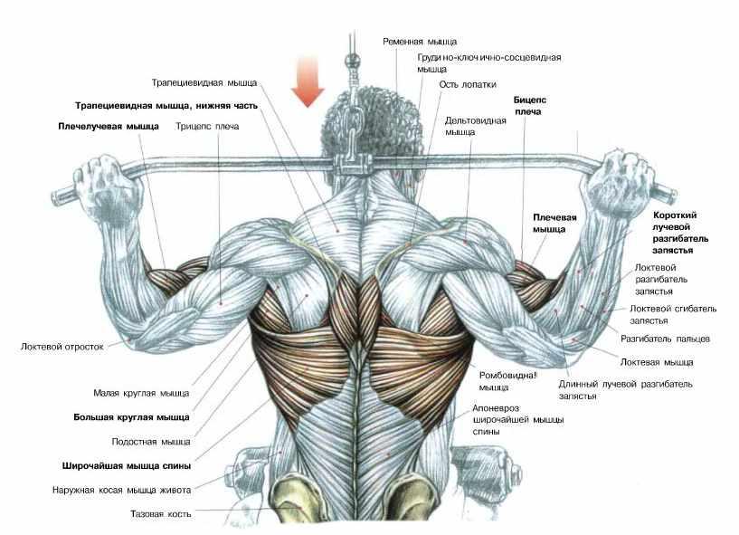 Схемы упражнений для мышц 42