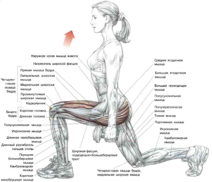 минусов как подтянуть мышцы лица силой мысли увеличения размера
