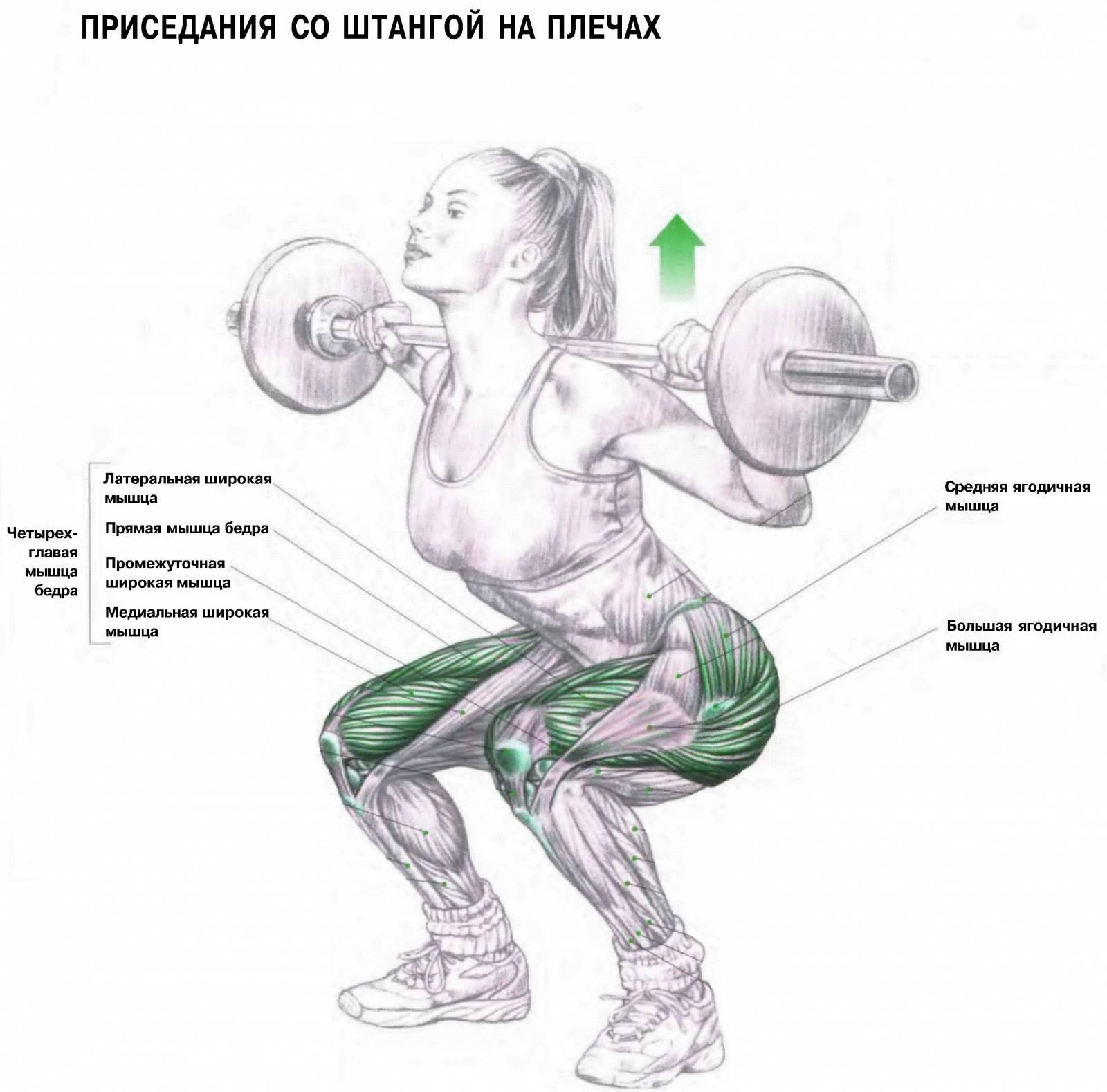 Только базовые упражнения