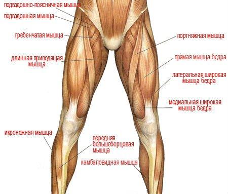 вмятина на мышце ноги что делать осуществляется