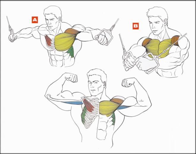 Как прокачать верхние грудные мышцы в домашних условиях