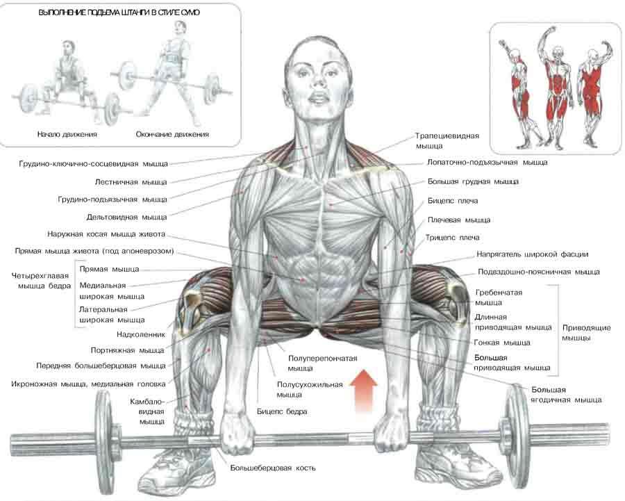 Упражнения с гантелями на трицепс для мужчин